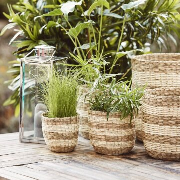 Seagrass Plant Baskets | Set of 5