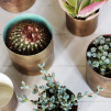 Pair of Metallic Plant Pots | Assorted Colours